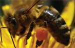 Northeast Ohio Honeybee Conference